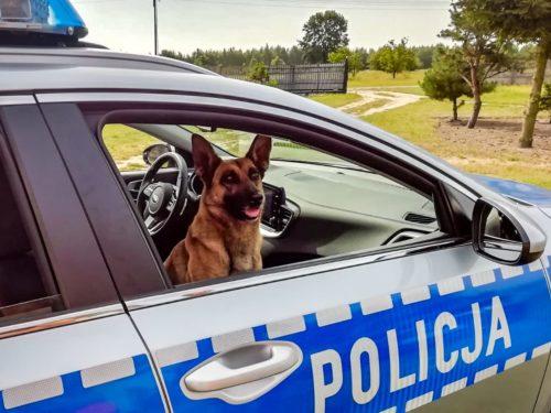 Policyjny pies wskazał pracownika jednej z rawskich firm, który miał przy sobie narkotyki
