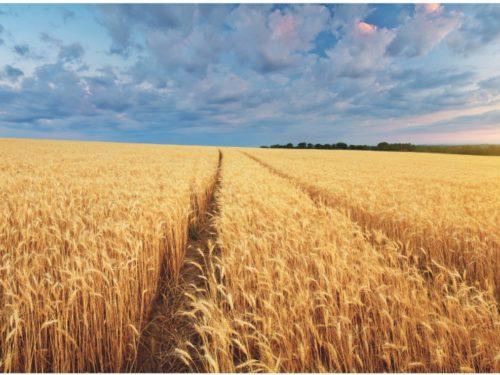 Spiszmy się jak na Rolników przystało! Czyli  Powszechny Spis Rolny 2020