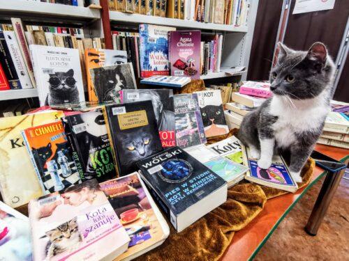 Kot w bibliotece? W Rawie nawet koty promują czytelnictwo